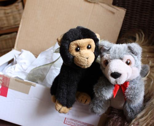 George & Wolfie