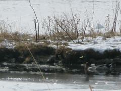 IMG_1439 (Luigi Tangana) Tags: nieve nuria 2008 vall