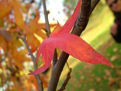 DSCF1297 (Matthew Garrett) Tags: autumn palace eltham
