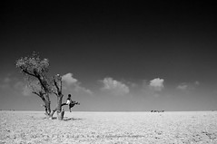 Lonely boy (wahid galib_dead head) Tags: boy sky blackandwhite tree clouds landscape nikon cowboy cattle ttl 1855mm bangladesh deadwood lightroom nikonflickraward nijhumdip gradientndfilter ttlsafarinijhumdip wahidgalib