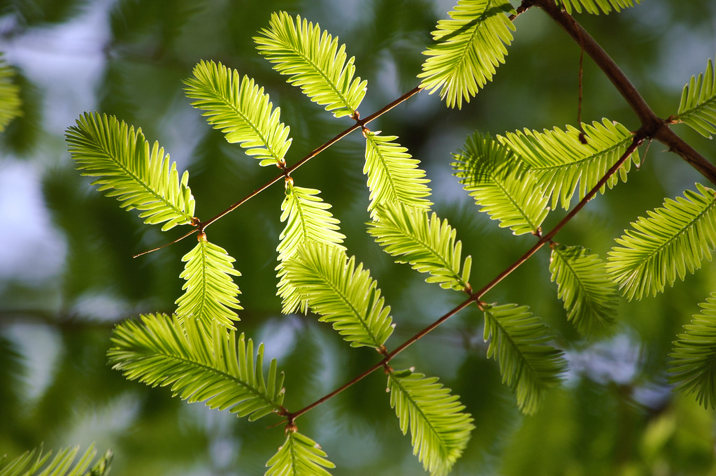 green*
