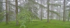 BOSQUE Y NIEBLA (Jesus Bravo) Tags: forest landscape nikon bravo jesus paisaje castro bosque capture niebla urdiales nx2 saldropo d7000 canonikos