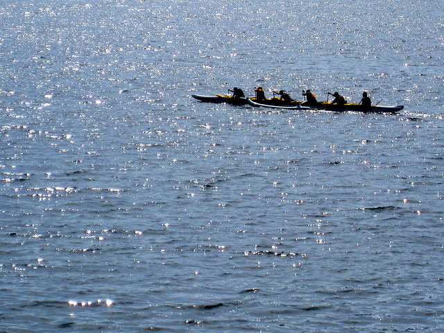 Maple Bay Rowers