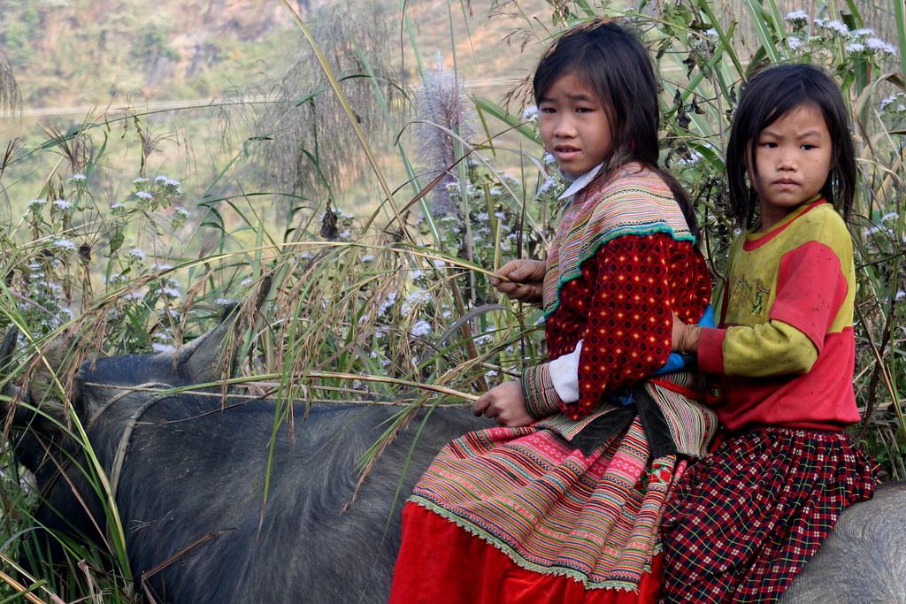 Asia - Vietnam / Flower Hmong