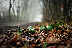 (andrewlee1967) Tags: leaves path mist trees canon50d 50d ef35mmf2 greenfield andrewlee1967 uk gb england britain dof bokeh mywinners andrewlee