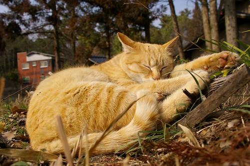 Stray Cat #45