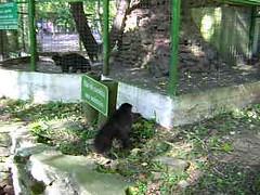 Anaïs & Monkeys