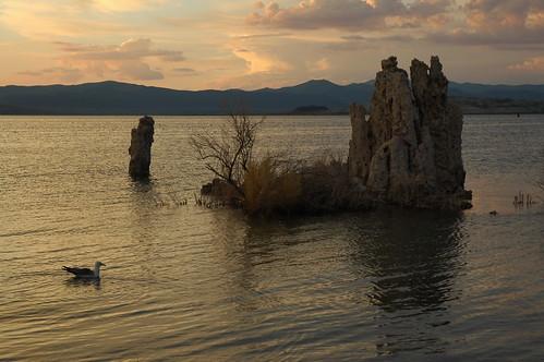 盐湖里的海鸥