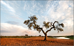 Alentejo || Golden fields (Jose Antonio Pascoalinho) Tags: sunset tree portugal clouds landscape puddle perspective environment alentejo zedith
