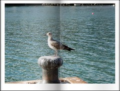 Una gaviota... de libro (celicom) Tags: costa azul muelle mar gaviota cantabrico burela
