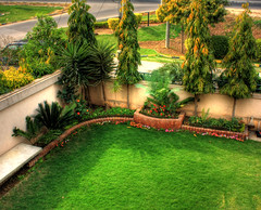A Very Nice Lawn