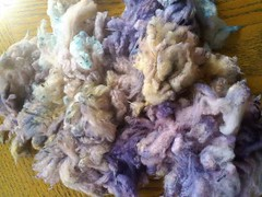 Dyed merino locks
