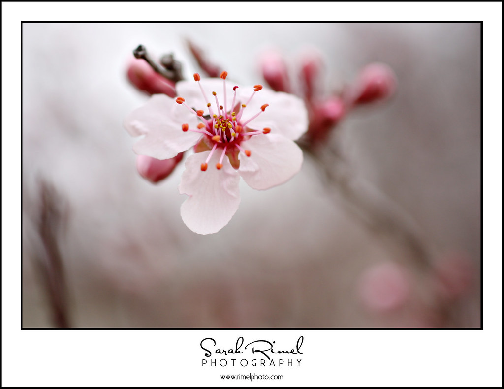 buds and blooms 14
