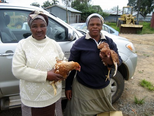 VHWs with their chickens
