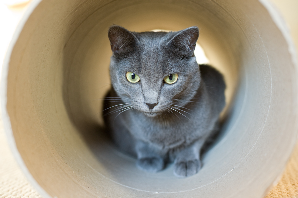 Tunnel Kitty