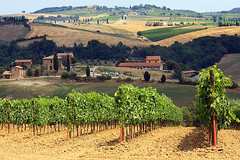 Vineyard (Pawel Boguslawski) Tags: italy field canon landscape view wine soil tuscany grape 40d