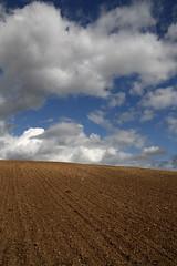 Terre de contraste (Jordn) Tags: canon ciel contraste terre vin tamron vignes aux vigne moines roche angers anjou ruralit tamron1750 savennires 450d pir