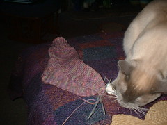 barni helping with sock knitting