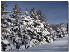 Snow Covered (Lisa-S) Tags: trees winter sky white snow ontario canada canon shadows lisas explore allrightsreserved invited caledon 7289 vosplusbellesphotos getty2009 copyrightlisastokes getty20091008