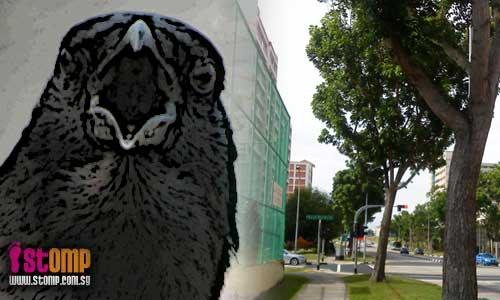 Crows attack pedestrians near Pasir Ris Crest Secondary