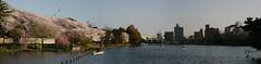 Senzoku No Ike Pano (!Ryno) Tags: pink blue lake green festival japan season tokyo boat spring no pano sakura ike ward ywam matsuri senzoku panograph senzo
