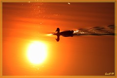 14april09 sunset in the water. (guus timpers) Tags: sunset orange reflection water yellow duck zonsondergang geel eend reflectie almelo woerd loolee loole roanje
