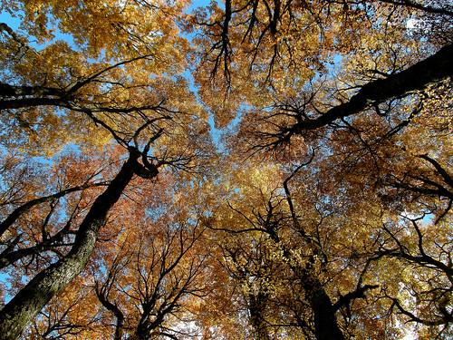 Bosque de Lengas da Mono Andes.
