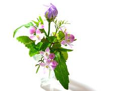 cure...* (ayaka) Tags: pink stilllife flower green japan lumix tokyo purple mint pale panasonic whitebackground elegant simple dfcfx33 aforgetmenot