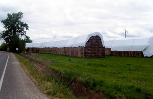 Hay at Hopmere