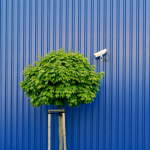 Tree watching by IKEA security by Heidelknips