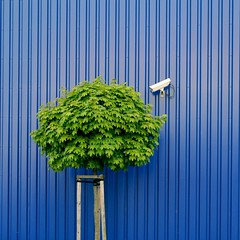 Tree watching by IKEA security (Heidelknips) Tags: camera blue tree green ikea wall 35mm germany freedom maple nikon minimal boring minimalism job baum pre observer walldorf ahorn urbanflora d90 explorefrontpage creativecomments treewatching entdeckediemglichkeiten kunskapenstrd bigbrotherforbirdstreeswhatever securityinpictures litrof prenolll nolll