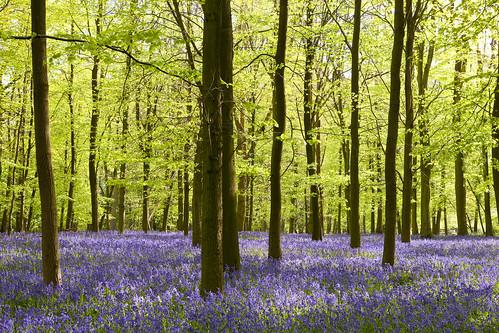 botanique : printemps en bleu et blanc - club alpin ile-de-france