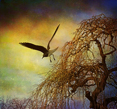 Untitled (Steve-h) Tags: ireland dublin tree bird gull explore textures steveh fujifilmfinepixs100fs skeletalmess