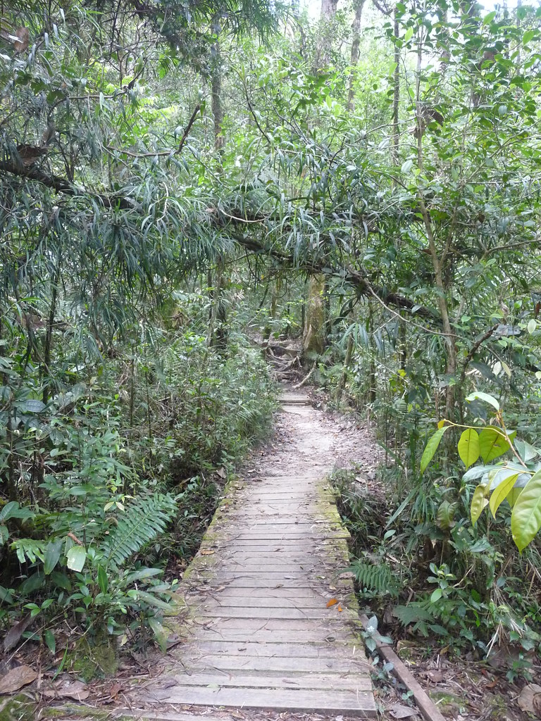 Kinabalu-PN (37)