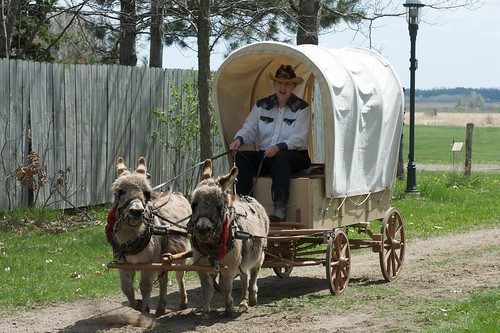 How to lower your property taxes: miniature donkeys?