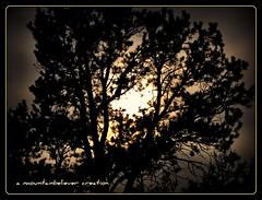 Nature Watches (mountainbeliever) Tags: trees sunset sky sunlight nature evening scenery colorado skies shadows sundown bright views picnik settingsun horizons perfectsunsetssunrisesandskys