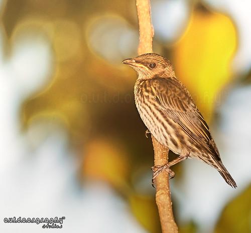 Bokehed Birdy