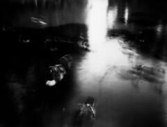 Burning to gold (richard314159) Tags: camera blackandwhite film geese view photograph largeformat viewcamera printfilm adox quarterplate bfm0609