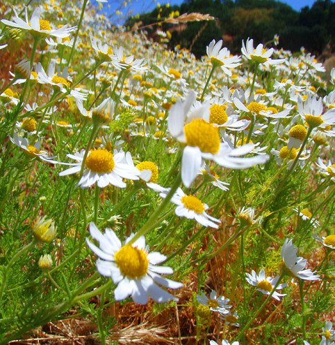 brian daisys1 copy