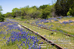 Kingsland Railroad