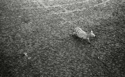 PZ07530 宮崎フェニックス自然動物園