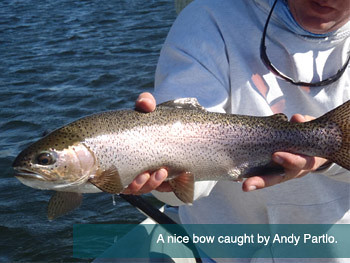 A nice bow caught by Andy Partlo