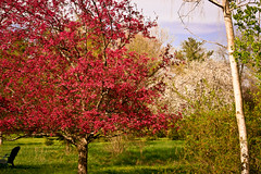 A place to dream (SolsticeSol) Tags: flowers usa tree nature horizontal landscape outdoors photography spring chair day michigan blossoms relaxing peaceful tranquility nopeople images dreamy serene tranquil springflowers scenics springtime greengrass prettybluesky floweringtrees bloomingtrees adamichigan colorimage beautyinnature springcolors treesinbloom bloomingflowers yardpictures springscene springtrees springspringspring outdoorchairs colorimages outdoorsetting lushgreengrass springpictures beautifulgardens dreamyimages treesinspring michiganlandscape peacefulimages imagesofspring springimages beautifulflowerpictures beautifulflowerimages floweringspringtrees picturesofspring springtimeimages tranquilimages beautifulspringimages dreamyspringimages floweringspringtimetrees serenespringimages picturesofbloomingtrees bloomingtreeimages prettyspringpictrues beautifulsittingareas springsetting colorimagecolorimages