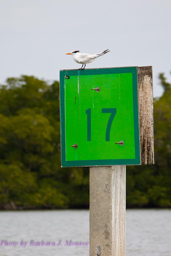 Everglades National Park-10,000 Islands (15 of 16)