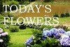 Todays-Flowers-Logo