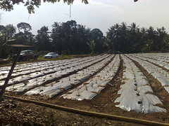 N952351 (Future Portfolio Agro) Tags: stan ladang wakaf