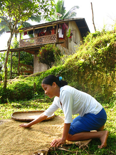 image of a barrio lass spreading rice grains for drying in a village, borrowed from farm4.static.flickr.com