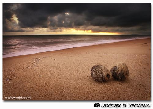 sunrise at teluk ketapang beach picture