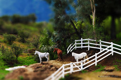tsf - tilt shift friday #3 - 3 horses (Kris Kros) Tags: look photoshop toys miniature nikon tsf touch models like shift kris tilt kkg fakes d300 cs4 kros kriskros pkchallenge kktouch kkgallery