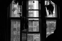 200903_06_06 - Pane